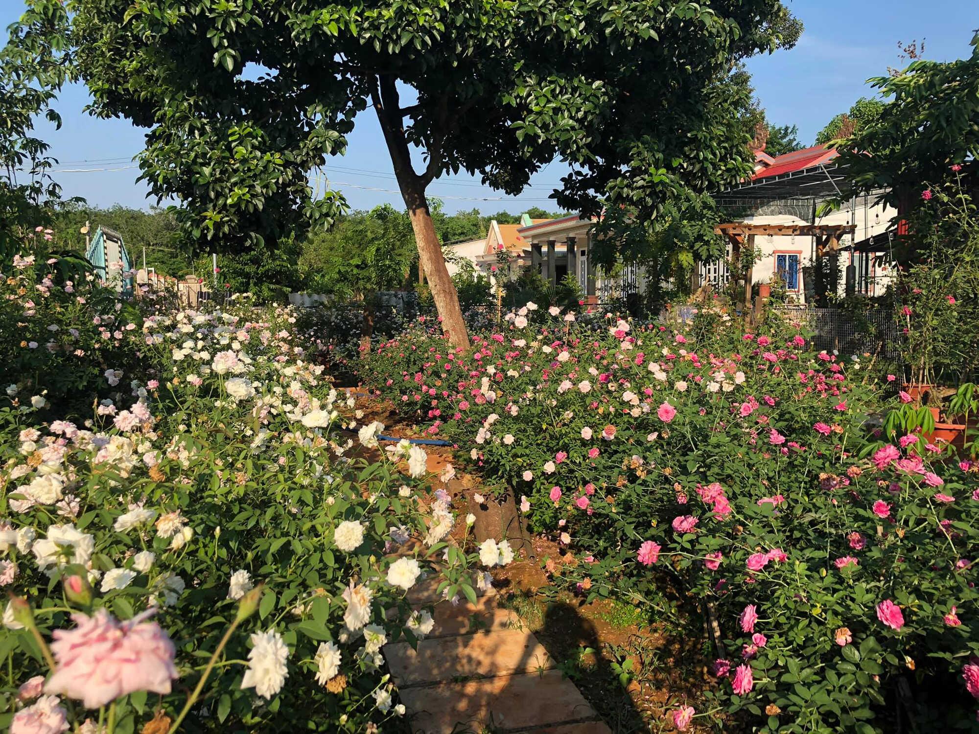 Ngôi nhà hoa hồng ở Vũng Tàu